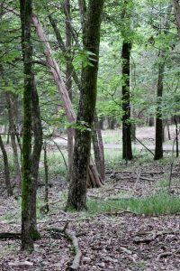 Long Hunter State Park